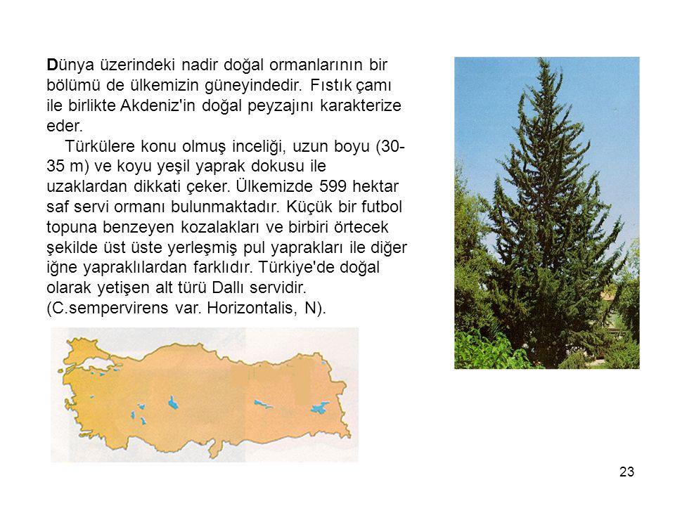 Dünya üzerindeki nadir doğal ormanlarının bir bölümü de ülkemizin güneyindedir.