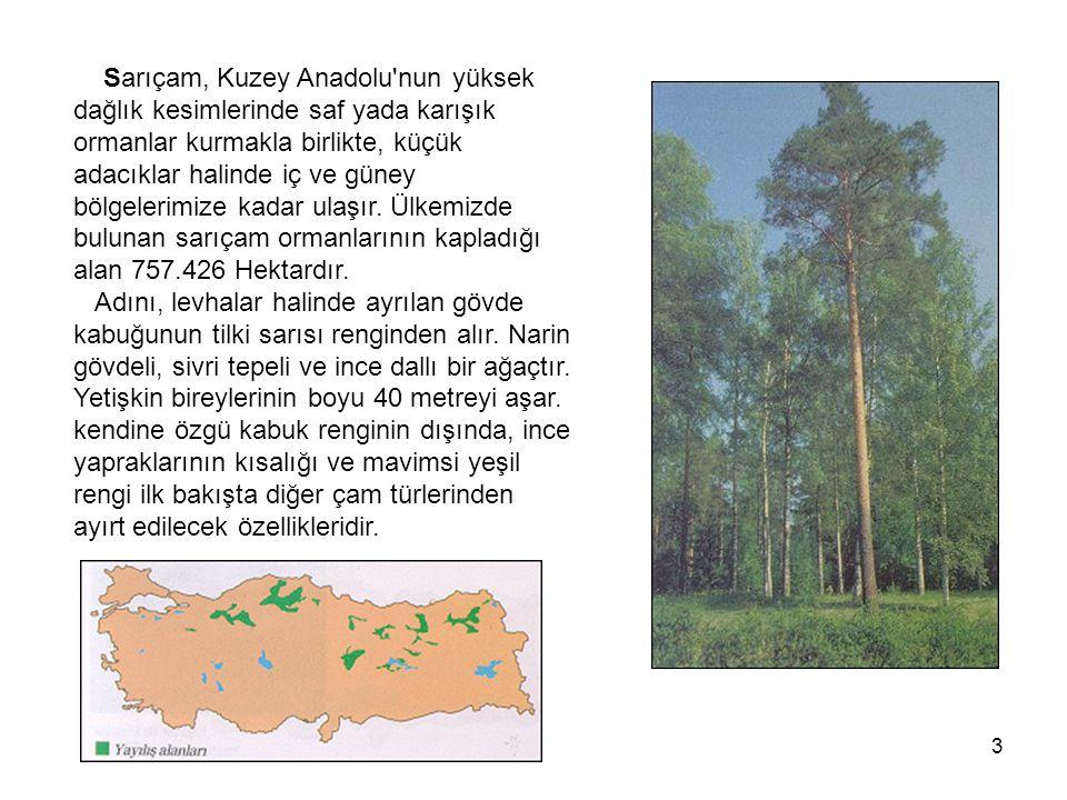 Sarıçam, Kuzey Anadolu nun yüksek dağlık kesimlerinde saf yada karışık ormanlar kurmakla birlikte, küçük adacıklar halinde iç ve güney bölgelerimize kadar ulaşır.