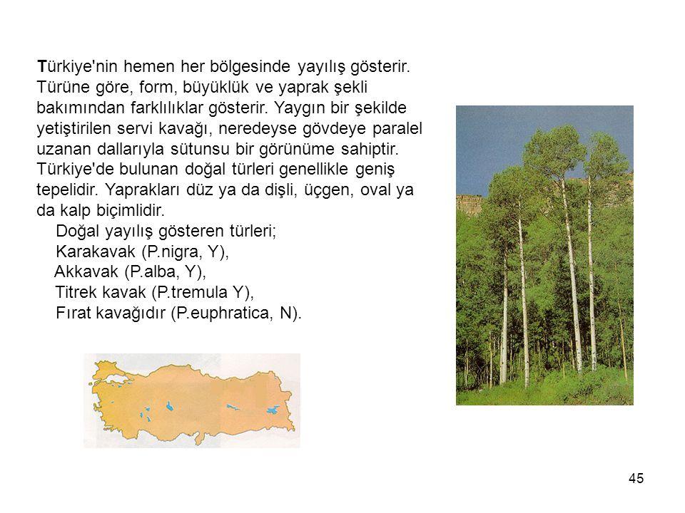 Türkiye nin hemen her bölgesinde yayılış gösterir