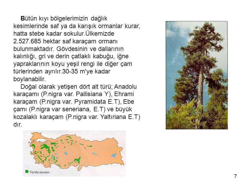 Bütün kıyı bölgelerimizin dağlık kesimlerinde saf ya da karışık ormanlar kurar, hatta stebe kadar sokulur.Ülkemizde 2.527.685 hektar saf karaçam ormanı bulunmaktadır.