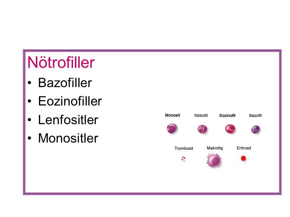 Nötrofiller Bazofiller Eozinofiller Lenfositler Monositler