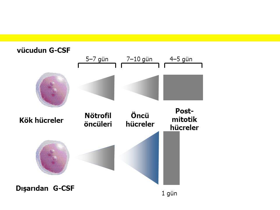 Post-mitotik hücreler