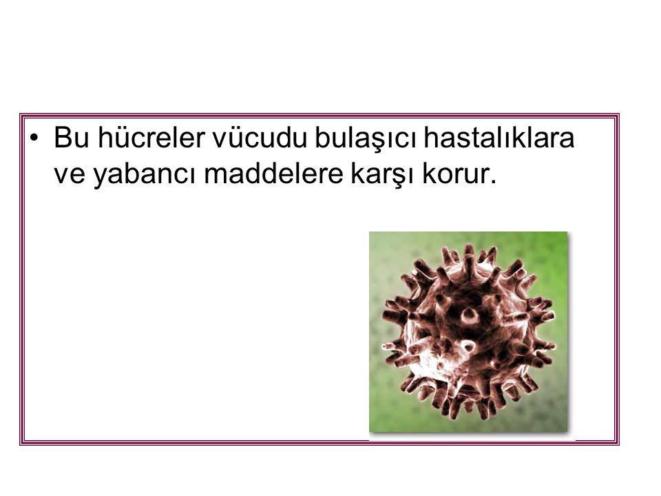 Bu hücreler vücudu bulaşıcı hastalıklara ve yabancı maddelere karşı korur.