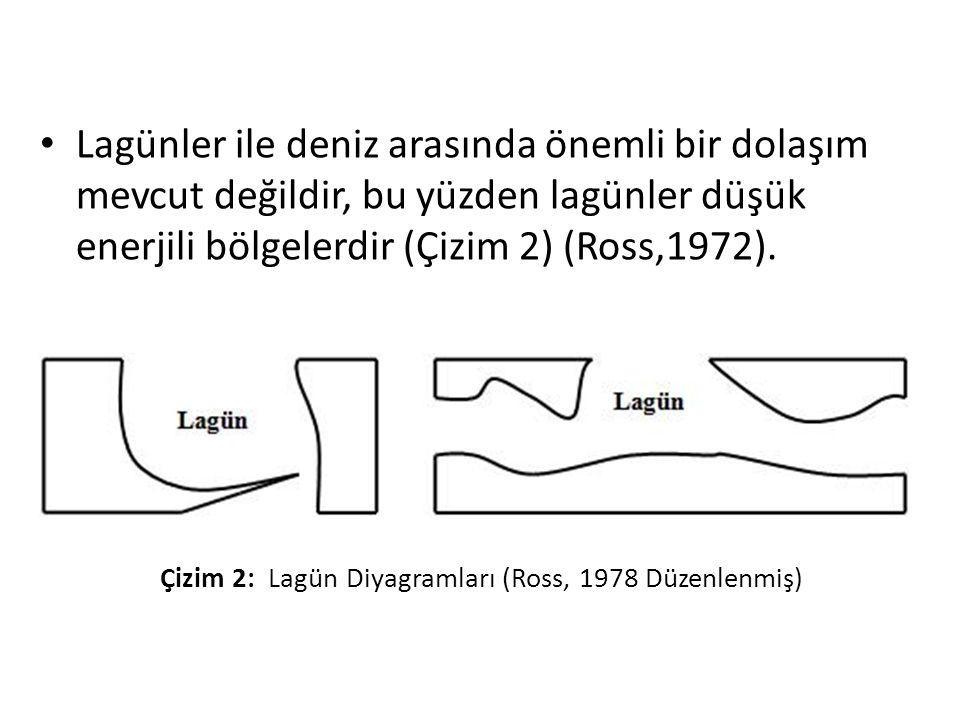 Lagünler ile deniz arasında önemli bir dolaşım mevcut değildir, bu yüzden lagünler düşük enerjili bölgelerdir (Çizim 2) (Ross,1972).