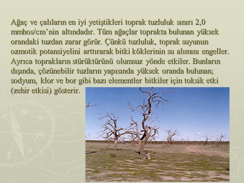 Ağaç ve çalıların en iyi yetiştikleri toprak tuzluluk sınırı 2,0 mmhos/cm'nin altındadır.