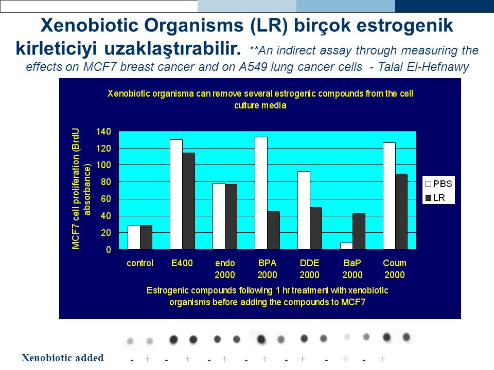 Xenobiotic Organisms (LR) birçok estrogenik kirleticiyi uzaklaştırabilir. **An indirect assay through measuring the effects on MCF7 breast cancer and on A549 lung cancer cells - Talal El-Hefnawy