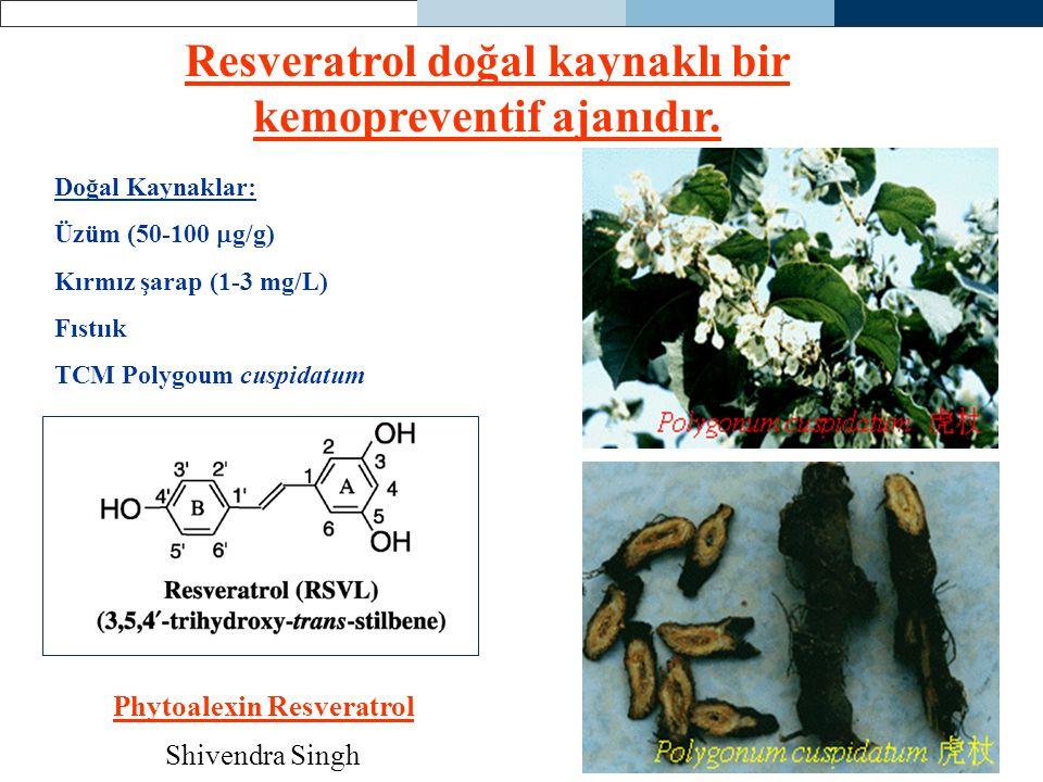 Resveratrol doğal kaynaklı bir kemopreventif ajanıdır.