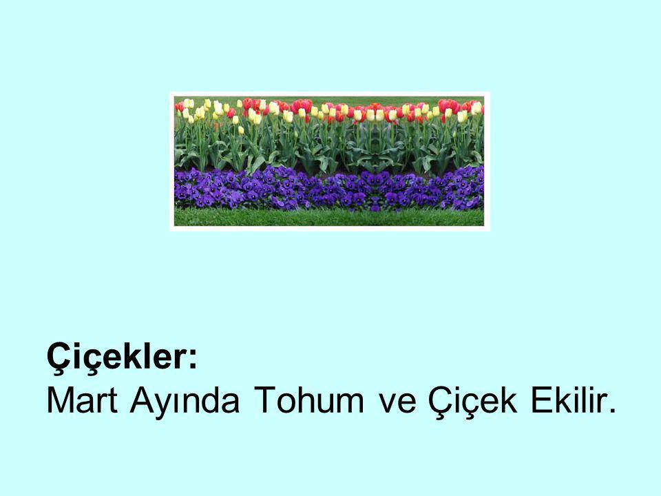 Çiçekler: Mart Ayında Tohum ve Çiçek Ekilir.
