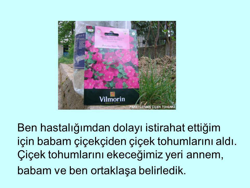 Ben hastalığımdan dolayı istirahat ettiğim için babam çiçekçiden çiçek tohumlarını aldı.