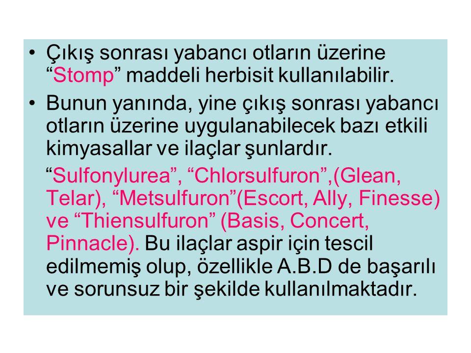 Çıkış sonrası yabancı otların üzerine Stomp maddeli herbisit kullanılabilir.