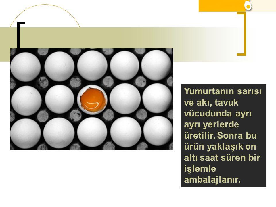 Yumurtanın sarısı ve akı, tavuk vücudunda ayrı ayrı yerlerde üretilir