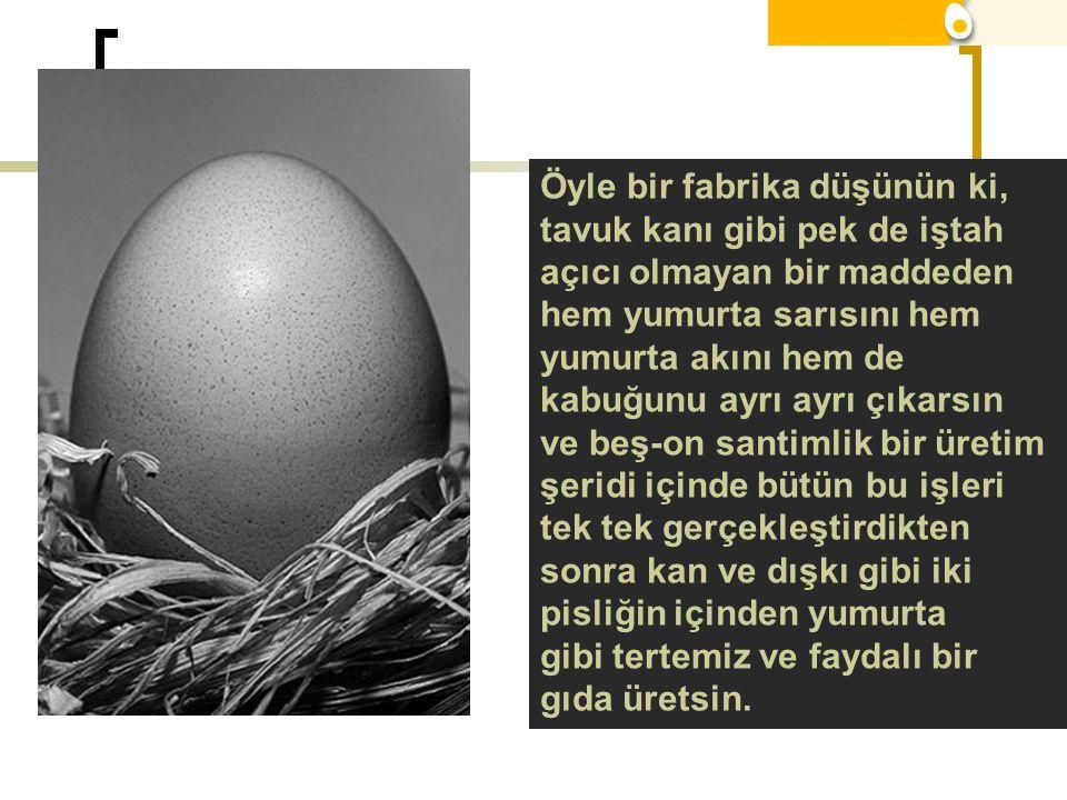 Öyle bir fabrika düşünün ki, tavuk kanı gibi pek de iştah açıcı olmayan bir maddeden hem yumurta sarısını hem yumurta akını hem de kabuğunu ayrı ayrı çıkarsın ve beş-on santimlik bir üretim şeridi içinde bütün bu işleri tek tek gerçekleştirdikten sonra kan ve dışkı gibi iki pisliğin içinden yumurta gibi tertemiz ve faydalı bir gıda üretsin.