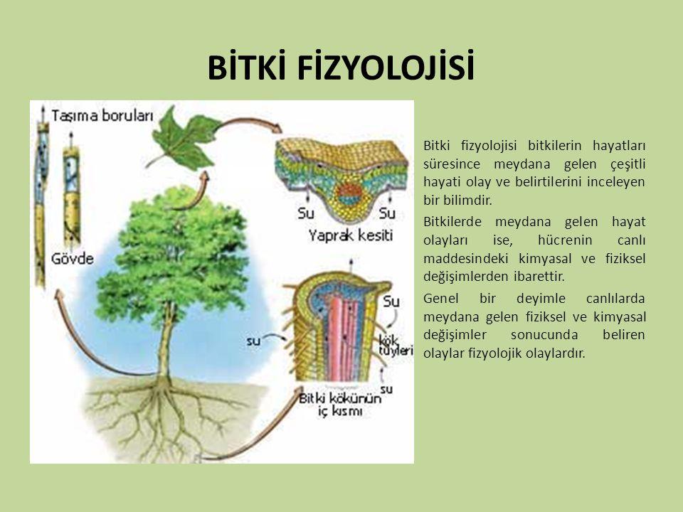 BİTKİ FİZYOLOJİSİ Bitki fizyolojisi bitkilerin hayatları süresince meydana gelen çeşitli hayati olay ve belirtilerini inceleyen bir bilimdir.