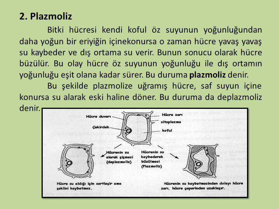 2. Plazmoliz