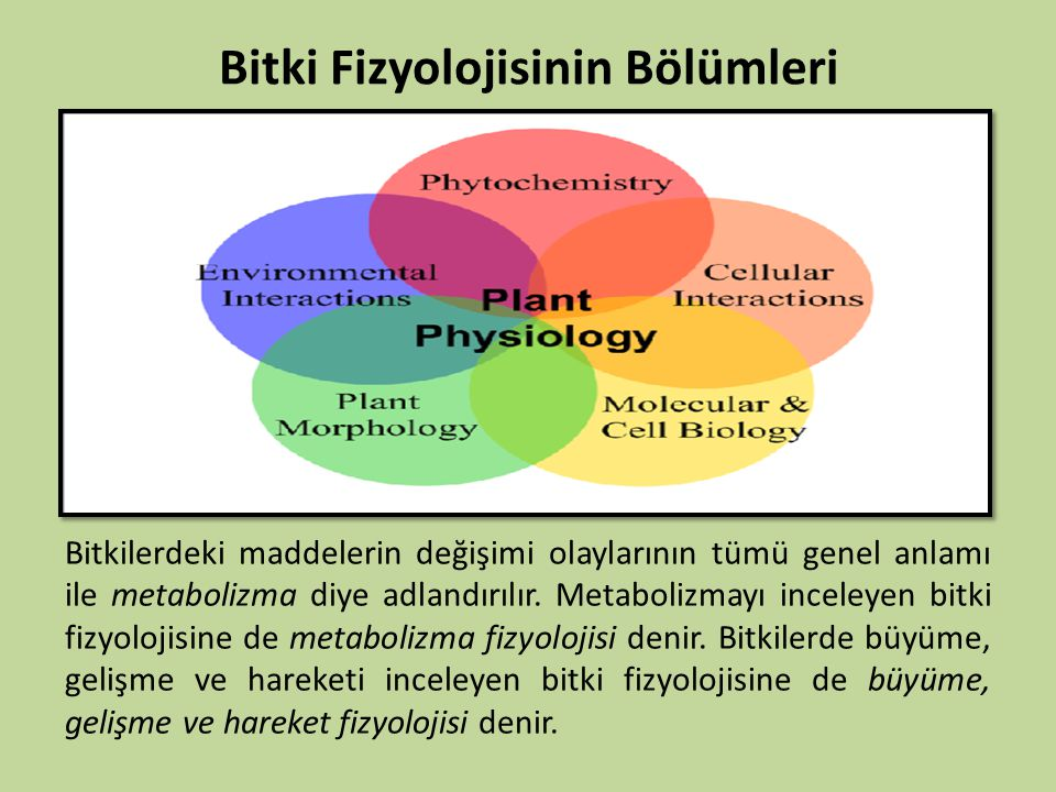 Bitki Fizyolojisinin Bölümleri