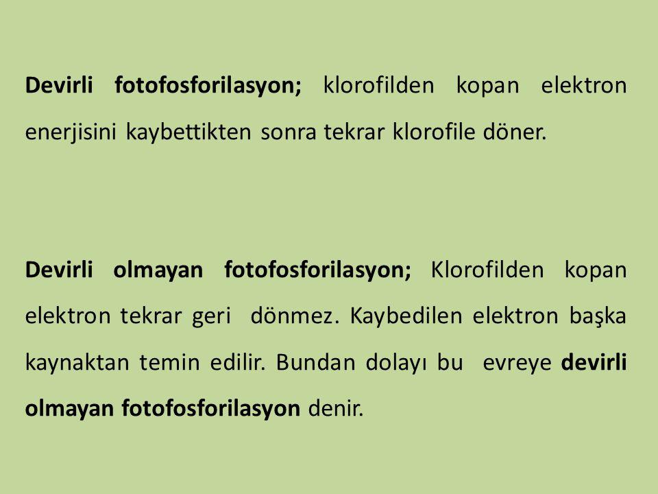 Devirli fotofosforilasyon; klorofilden kopan elektron enerjisini kaybettikten sonra tekrar klorofile döner.