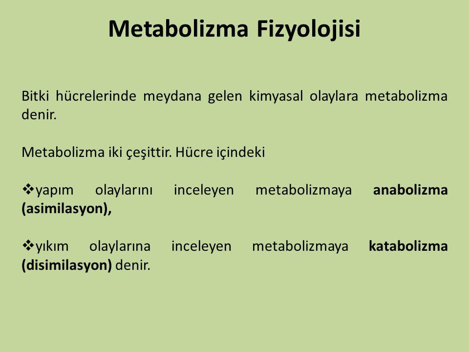 Metabolizma Fizyolojisi