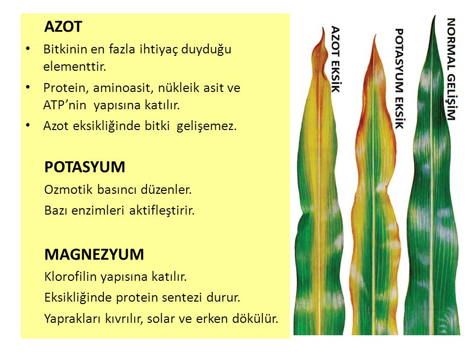 AZOT POTASYUM MAGNEZYUM Bitkinin en fazla ihtiyaç duyduğu elementtir.