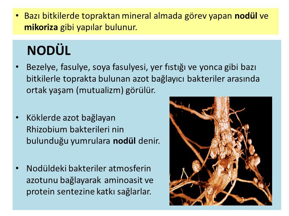 Bazı bitkilerde topraktan mineral almada görev yapan nodül ve mikoriza gibi yapılar bulunur.