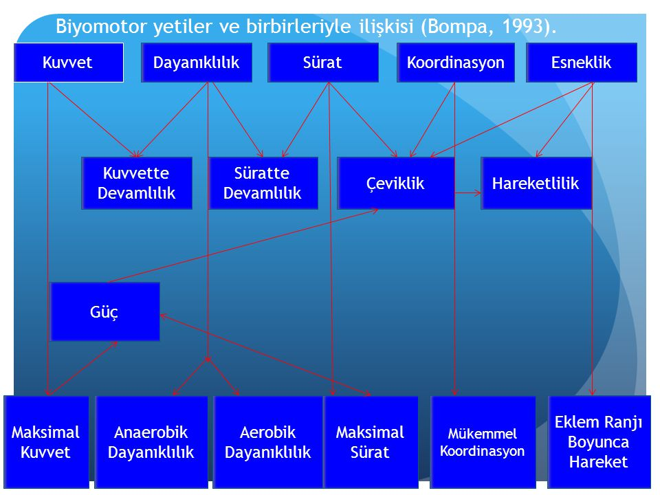 Biyomotor yetiler ve birbirleriyle ilişkisi (Bompa, 1993).