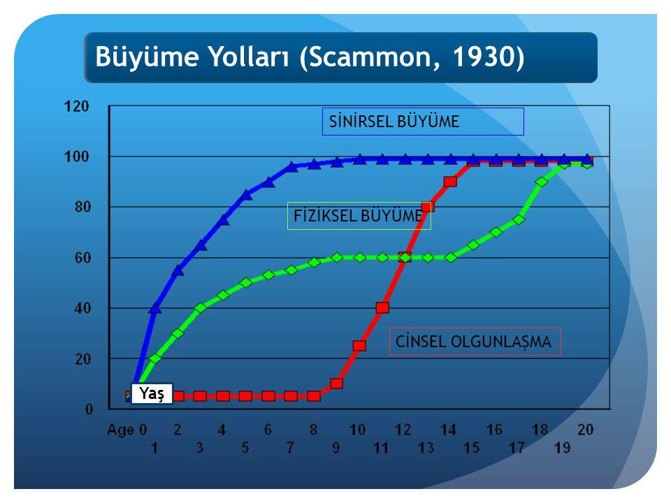 Büyüme Yolları (Scammon, 1930)
