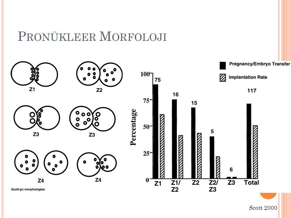 Pronükleer Morfoloji Scott 2000