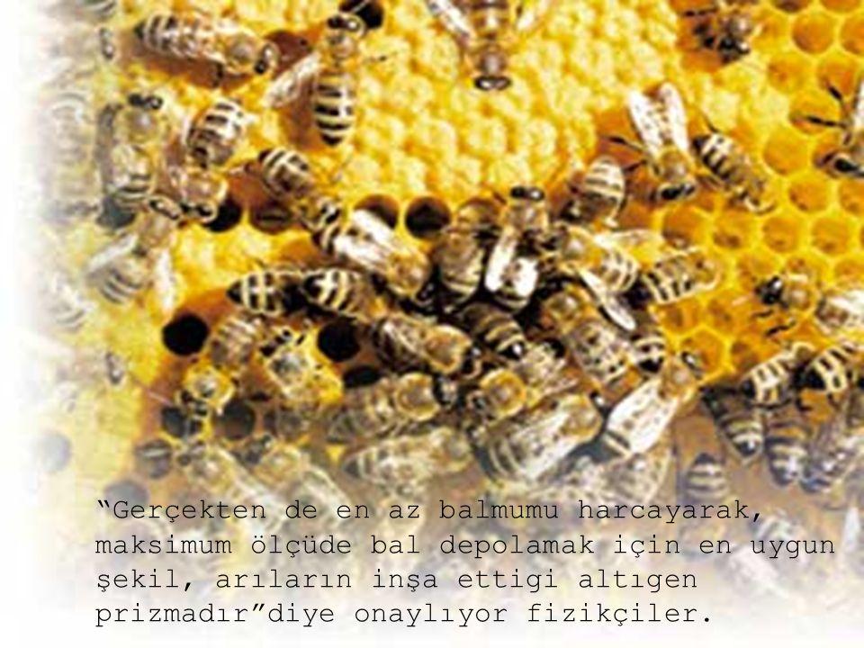Gerçekten de en az balmumu harcayarak, maksimum ölçüde bal depolamak için en uygun şekil, arıların inşa ettigi altıgen prizmadır diye onaylıyor fizikçiler.