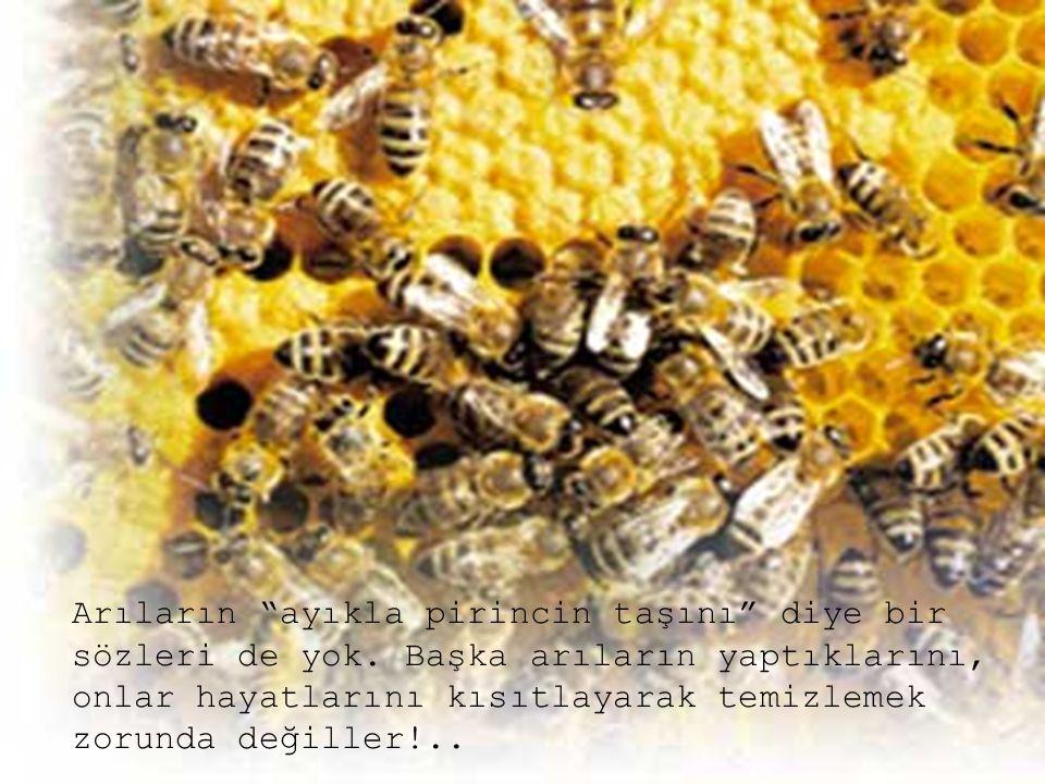 Arıların ayıkla pirincin taşını diye bir sözleri de yok