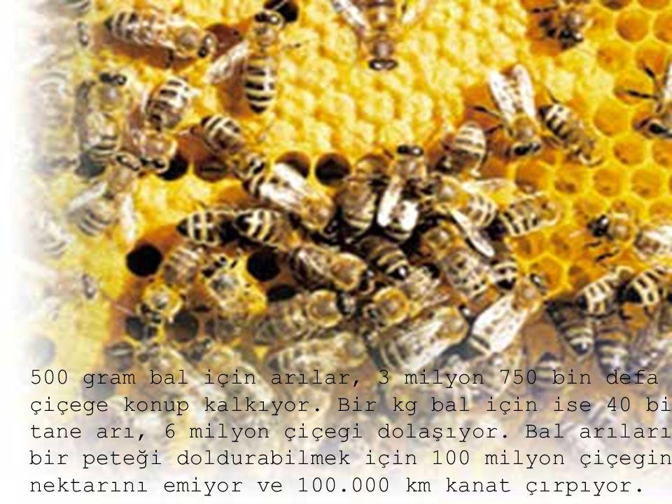 500 gram bal için arılar, 3 milyon 750 bin defa çiçege konup kalkıyor