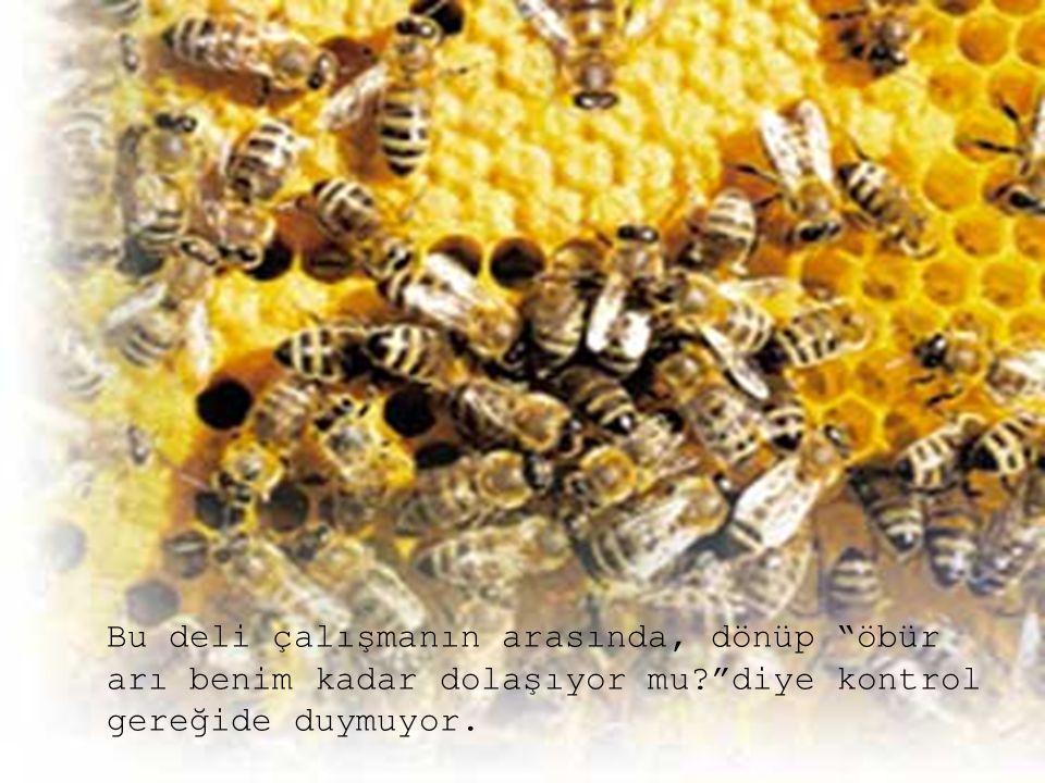Bu deli çalışmanın arasında, dönüp öbür arı benim kadar dolaşıyor mu