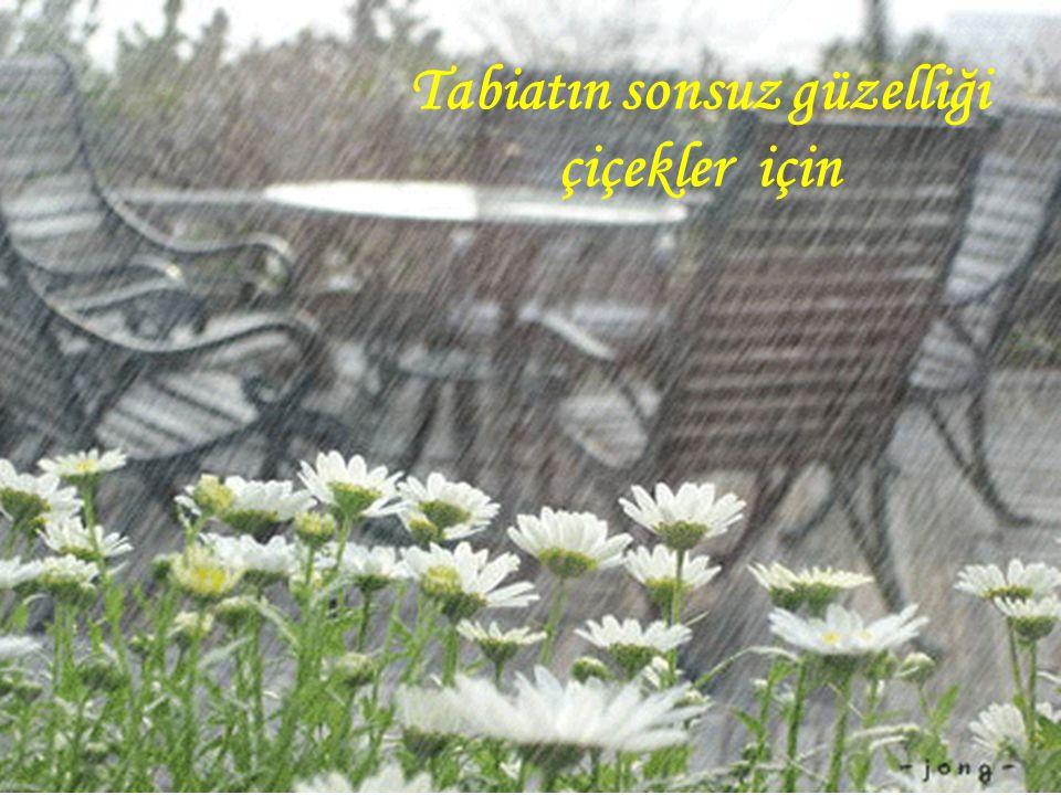 Tabiatın sonsuz güzelliği çiçekler için