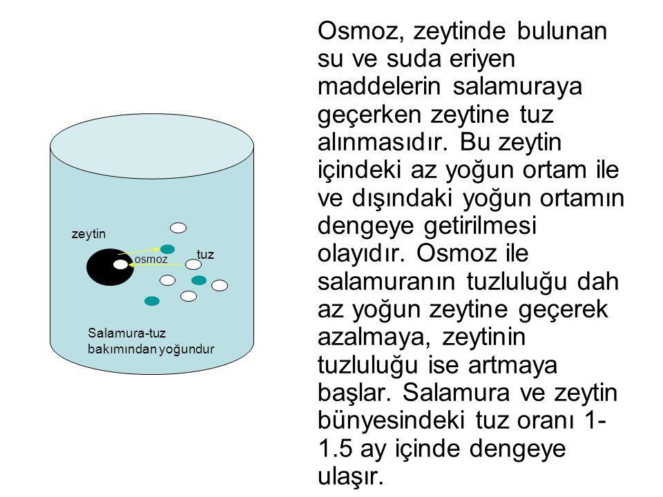 Osmoz, zeytinde bulunan su ve suda eriyen maddelerin salamuraya geçerken zeytine tuz alınmasıdır. Bu zeytin içindeki az yoğun ortam ile ve dışındaki yoğun ortamın dengeye getirilmesi olayıdır. Osmoz ile salamuranın tuzluluğu dah az yoğun zeytine geçerek azalmaya, zeytinin tuzluluğu ise artmaya başlar. Salamura ve zeytin bünyesindeki tuz oranı 1-1.5 ay içinde dengeye ulaşır.