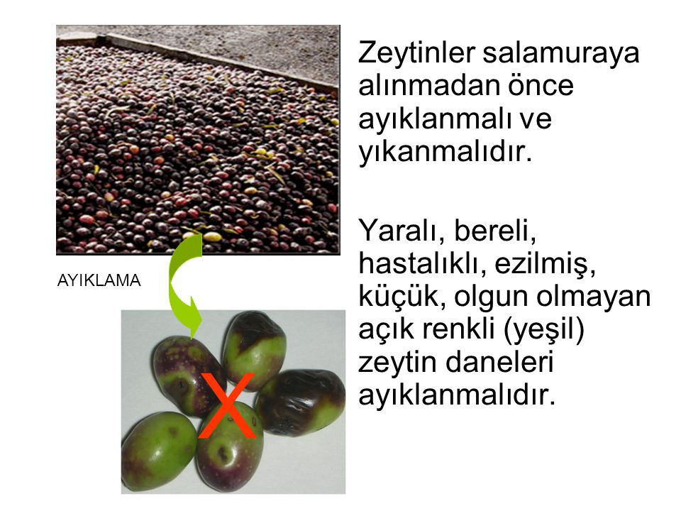 X Zeytinler salamuraya alınmadan önce ayıklanmalı ve yıkanmalıdır.
