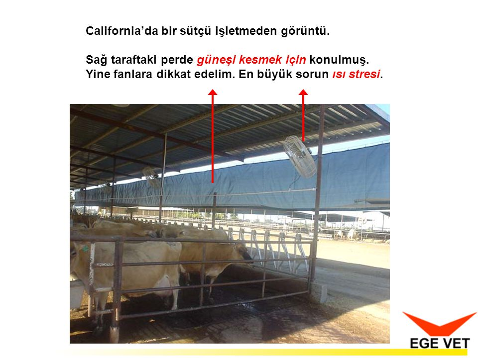 California'da bir sütçü işletmeden görüntü