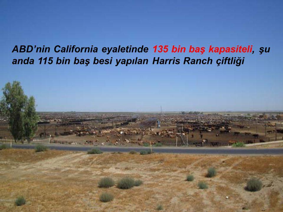 ABD'nin California eyaletinde 135 bin baş kapasiteli, şu anda 115 bin baş besi yapılan Harris Ranch çiftliği