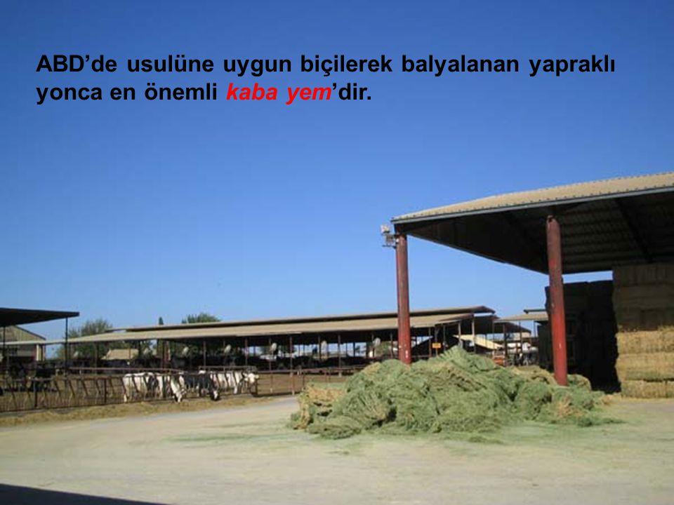 ABD'de usulüne uygun biçilerek balyalanan yapraklı yonca en önemli kaba yem'dir.