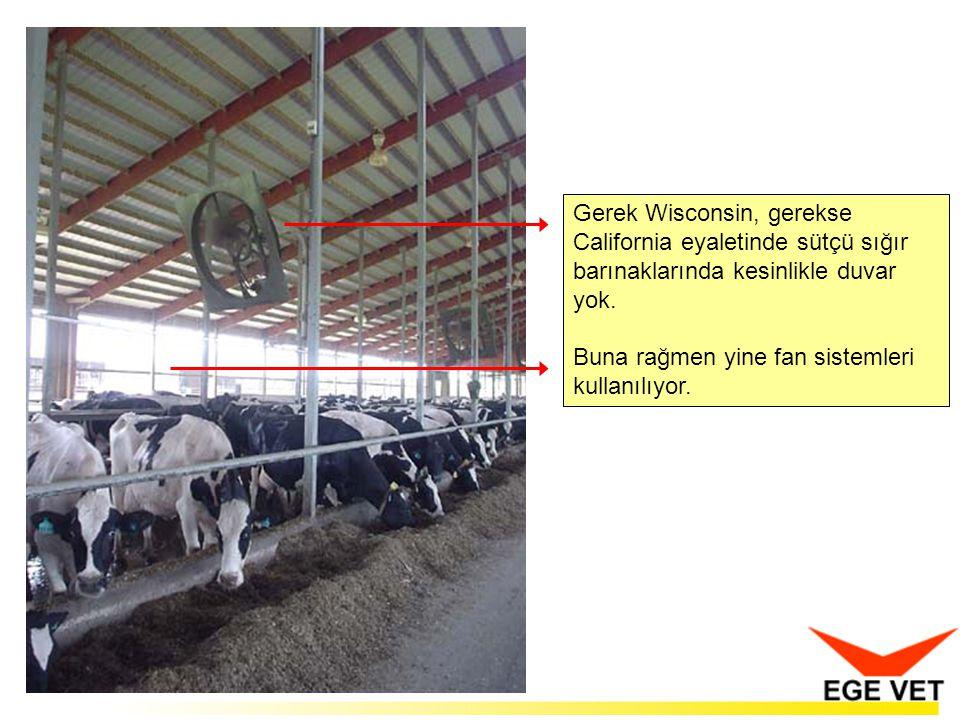 Gerek Wisconsin, gerekse California eyaletinde sütçü sığır barınaklarında kesinlikle duvar yok.