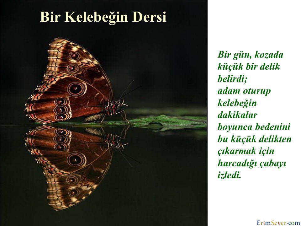 Bir Kelebeğin Dersi Bir gün, kozada küçük bir delik belirdi;