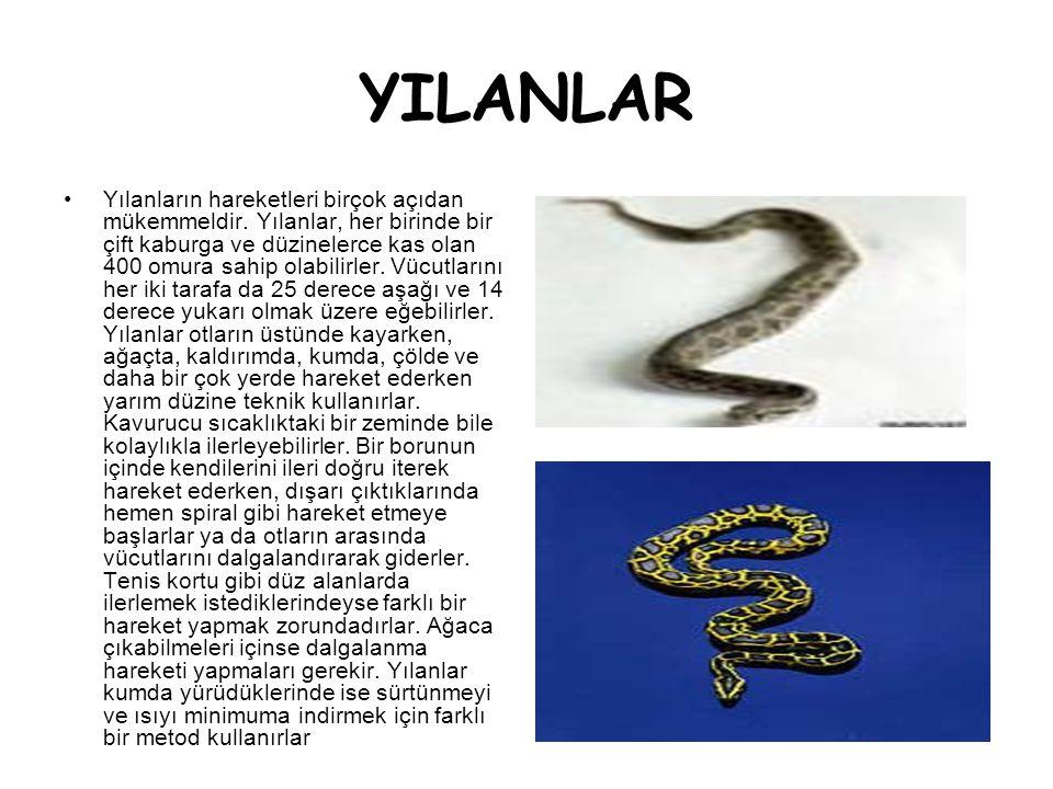 YILANLAR