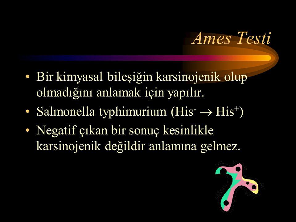 Ames Testi Bir kimyasal bileşiğin karsinojenik olup olmadığını anlamak için yapılır. Salmonella typhimurium (His-  His+)