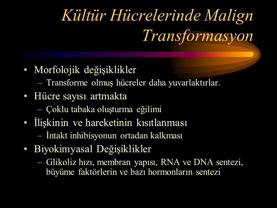 Kültür Hücrelerinde Malign Transformasyon