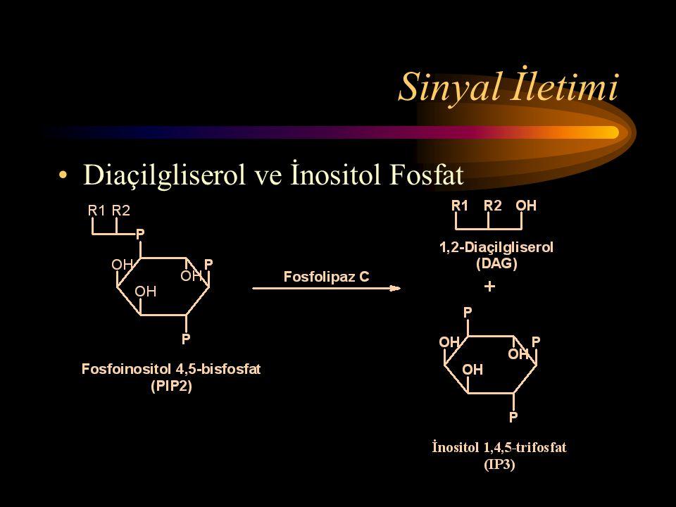 Sinyal İletimi Diaçilgliserol ve İnositol Fosfat