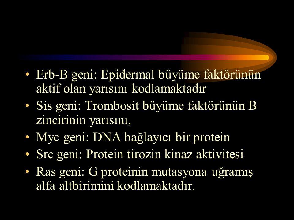 Erb-B geni: Epidermal büyüme faktörünün aktif olan yarısını kodlamaktadır