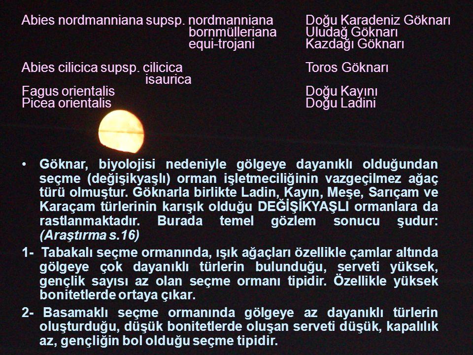 Abies nordmanniana supsp. nordmanniana Doğu Karadeniz Göknarı