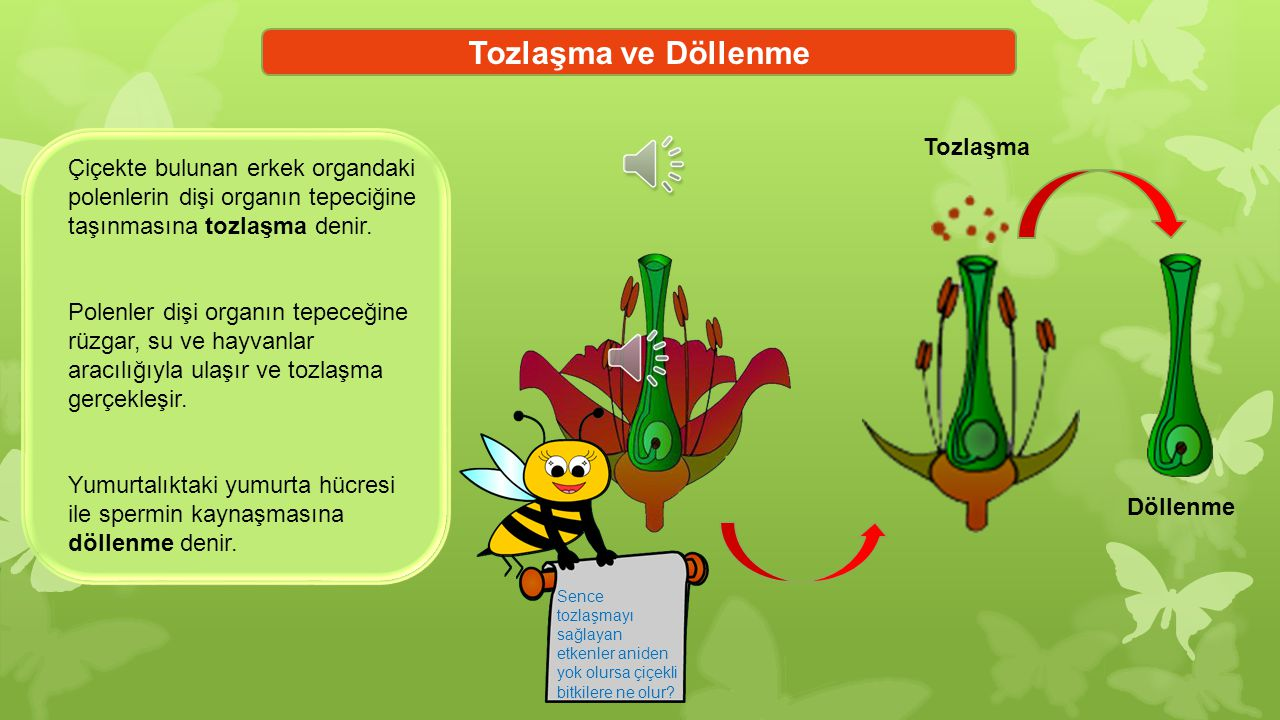 Tozlaşma ve Döllenme Tozlaşma Çiçekte bulunan erkek organdaki