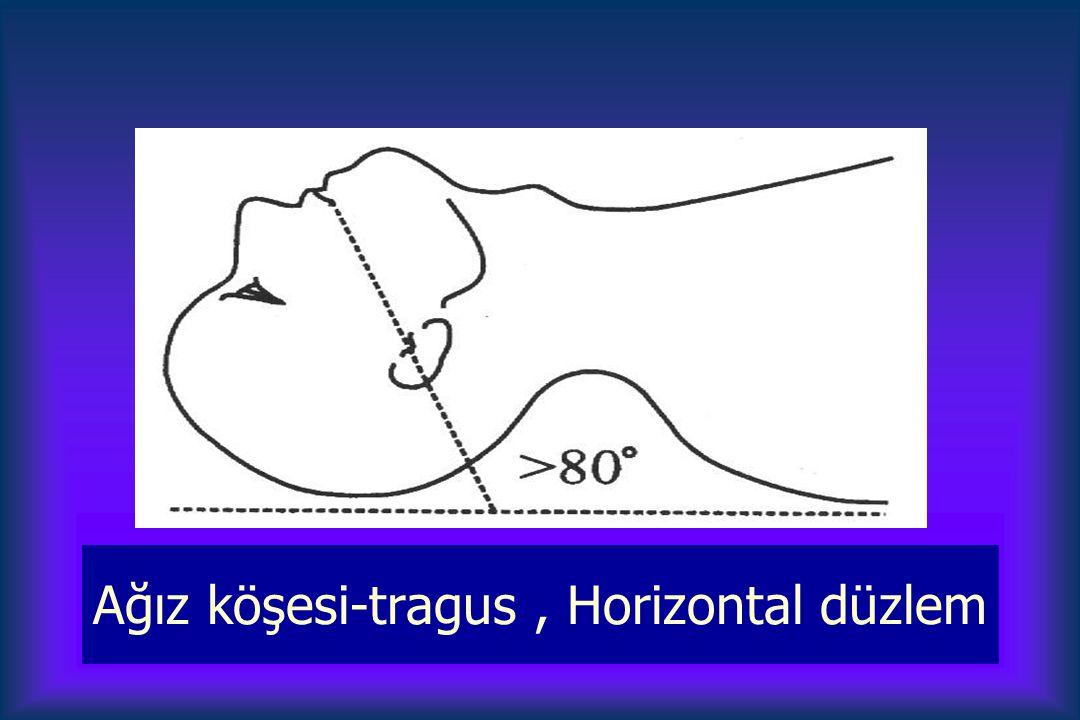 Ağız köşesi-tragus , Horizontal düzlem
