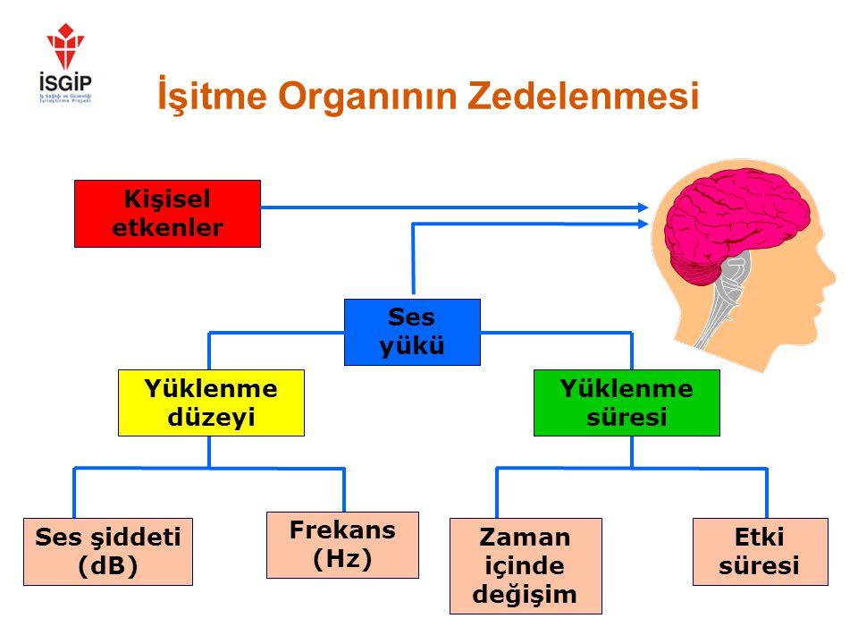 İşitme Organının Zedelenmesi