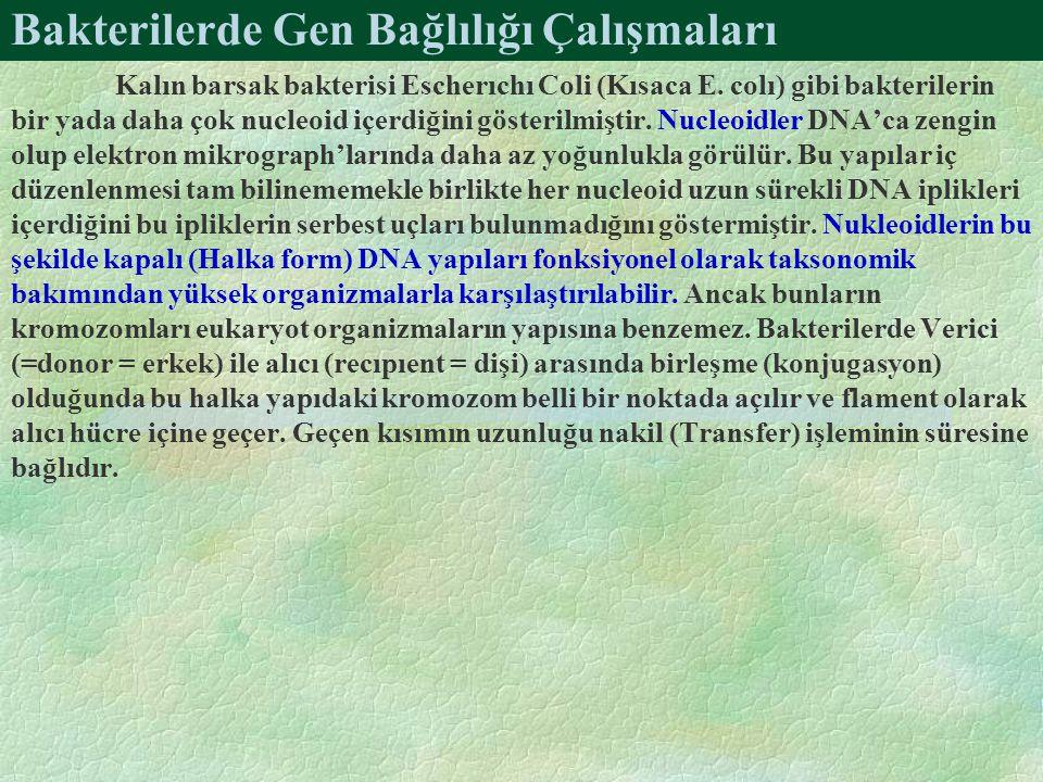 Bakterilerde Gen Bağlılığı Çalışmaları