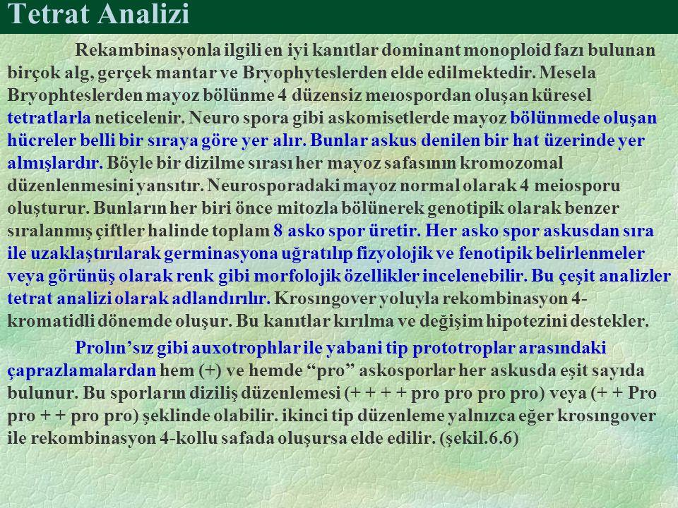 Tetrat Analizi