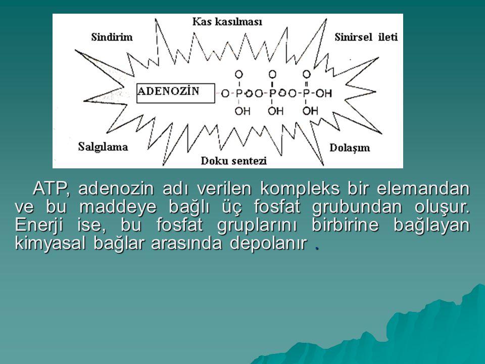 ATP, adenozin adı verilen kompleks bir elemandan ve bu maddeye bağlı üç fosfat grubundan oluşur.